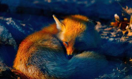 Firefox 1, 2, 3 c'est presque parti!