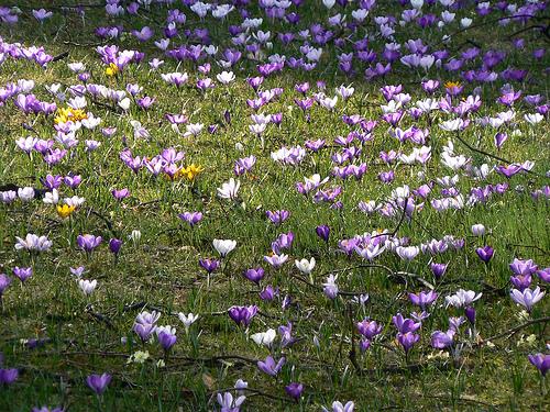 Look de printemps