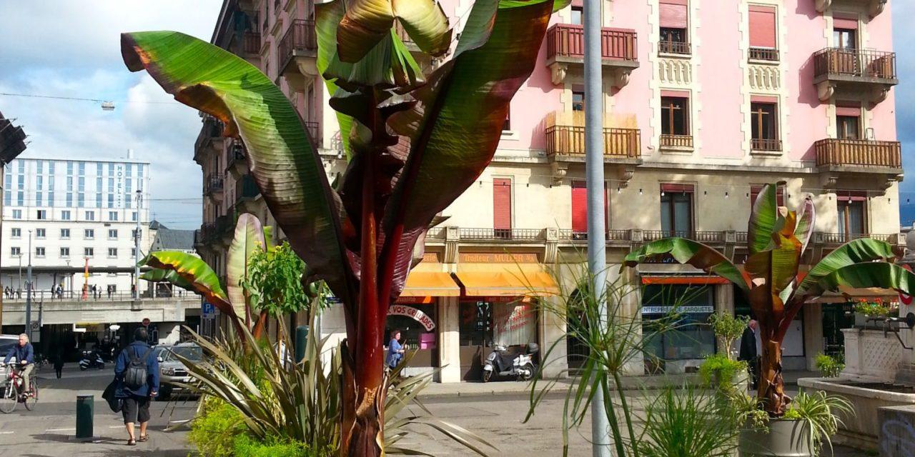Genève: J'ai retrouvé le jardin itinérant!