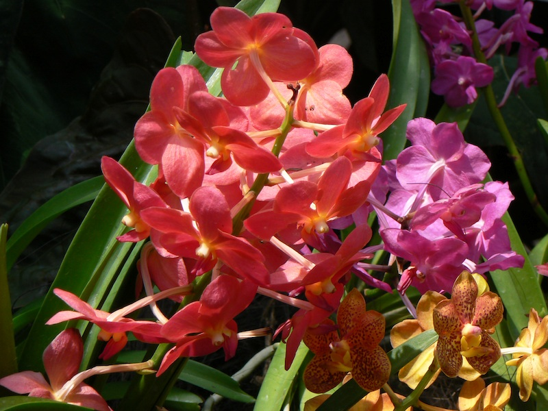 National_Orchid_Garden_SG Photo by CmicBlog - CC by-nc-sa